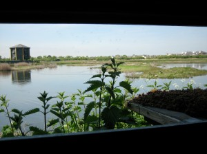 View from a Hide