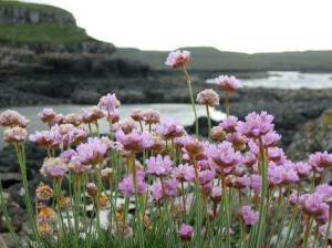 Wildflowers Below Glengorm Castle